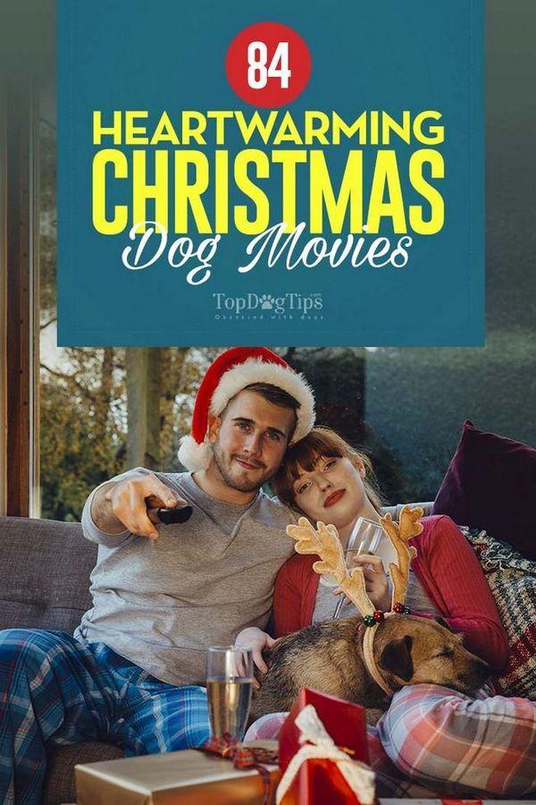 82 Filme de câine de Crăciun cu căldură [infographic]